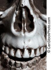 fotografia, szczelnie-do góry, ludzka czaszka