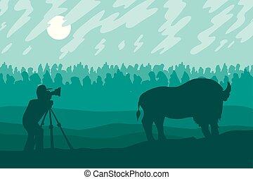 fotografie, fotografo, camminare, bizon, campo