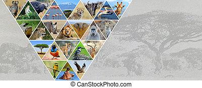 fotografie, koláž, afričan, animals., pohybovat se, pojem