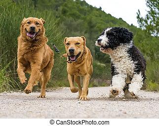 fotografie, von, a, hunden
