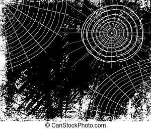 fotoricettori, ragno