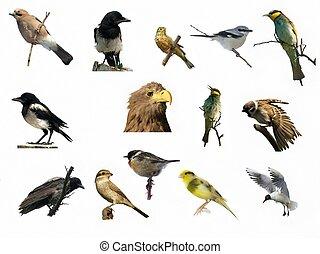 foto's, anders, vogel