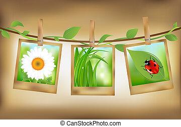 fotos, imagen, naturaleza
