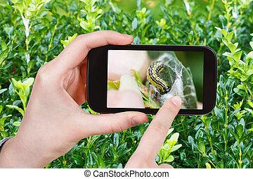 foto's, larve, insect, pest, farmer, boxtree