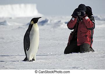 fotos, pinguin