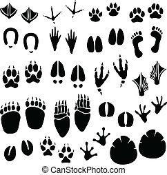 fotspår, spåra, vektor, djur