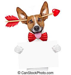 fou, chien, valentines, amour, jour