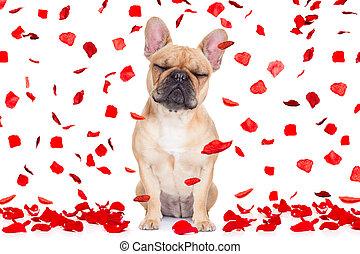 fou, valentines, amour, chien, jour