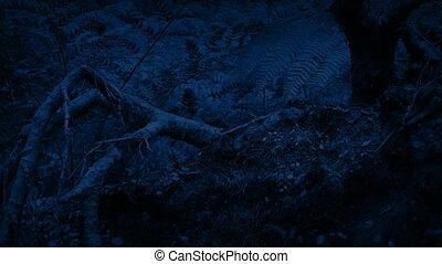 fougères, dépassement, nuit, racines
