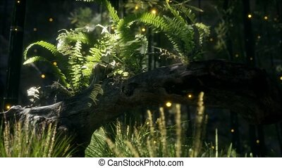 fougères, lumière soleil, croissant, arbre, briller, courber...