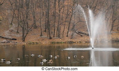 Fountain and ducks in Kiev , Kitaevo.