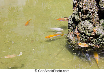 Fountain with goldfish