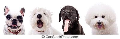 four amazed puppy dogs
