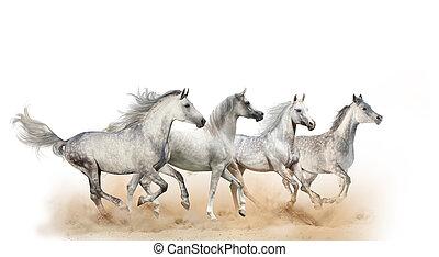 Four beautiful arabian horses