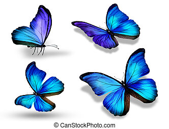 Four blue butterfly, isolated on white background