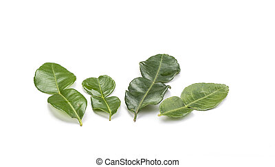 Four branches of lime leaves