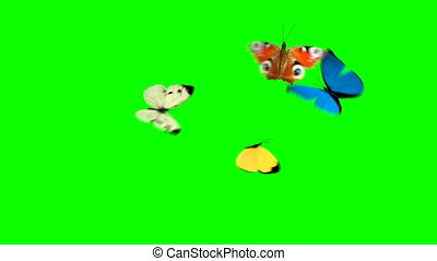 Four Butterflies Fly on a Green Background. Two Beautiful 3d...