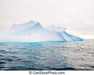 Chinstrap penguins on slope of iceberg near Spert Island...