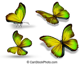 Four color butterfly