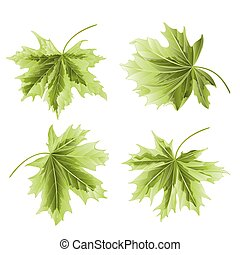 Four Colored leaves Maple vector.eps