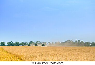 Four Combine Harvesters Harvesting Wheat in Field under Blue Sky