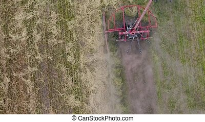 Four combines harvesting lentil field on the Saskatchewan...