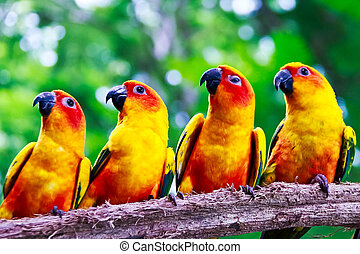 four conures parrots are sitting on a tree branch and turns to t