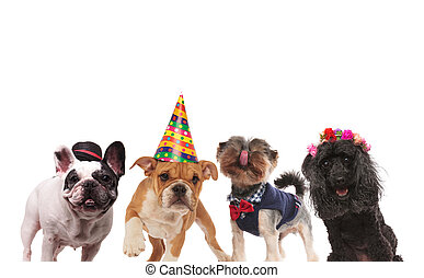 four cute little dogs ready for a party