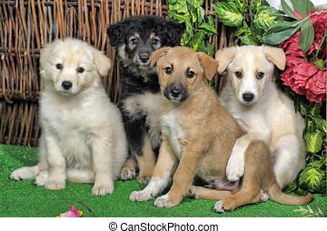 four cute pooch puppy