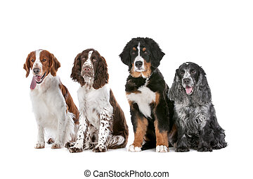 four dogs in a row