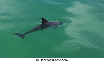 Four dolphins in the water