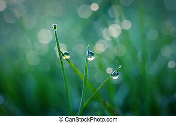 drops of dew