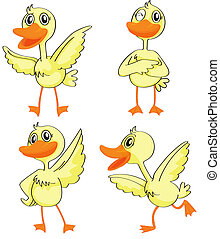 Four ducklings - Illustration of four ducklings on a white...
