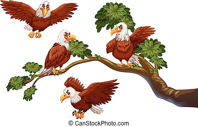 Four eagles on the branch