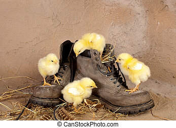Four easter chicks climbing shoes