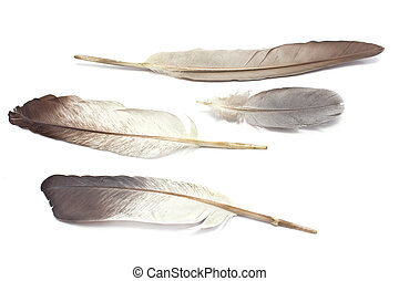 Four feathers isolated on white