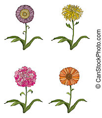 Four Flowers - Hand drawn chrysanthemum, peony, daisy and...