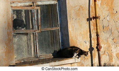 Four funny cats sit in an old vintage window and look...