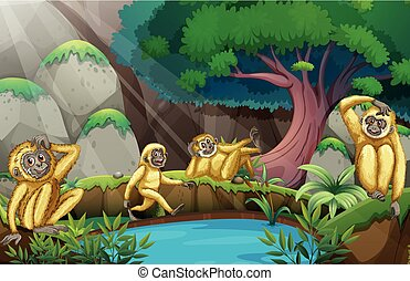 Four gibbons in the forest