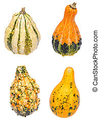Four different gourds on white.