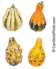 Four Gourds on White - Four different gourds on white.