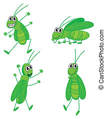 Four grasshoppers - Illustration of four grasshoppers on a...