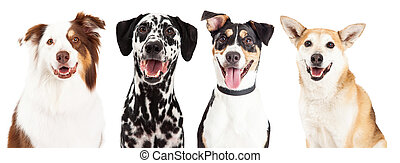 Four Happy Dog Closeups - Close-up head shots of four happy...