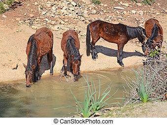 four horses drinking
