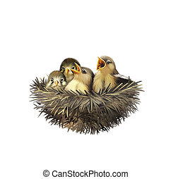 Four hungry baby sparrows in a nest wanting the mother bird to come and feed them, Bird nest with young birds
