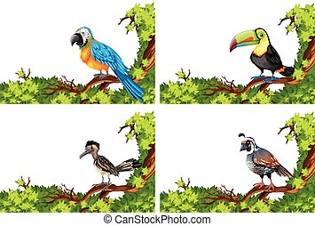 Four kinds of bird on the branches