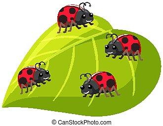 Four ladybugs on green leaf on white background