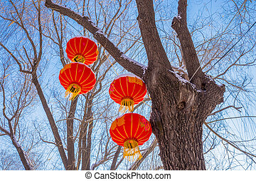 Four lanterns hanging from tree in winter