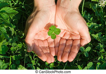 Four leaf clover - Female hand holding a four leaf clover on...