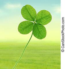 Four leaf clover - Green four leaf clover - illustration.